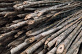 Fresh bamboo wood Stock Photos