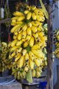 Fresh banana yellow in the market in duong dong phu quoc island vietnam Royalty Free Stock Photography