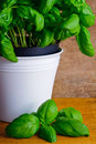 Fresh basil Royalty Free Stock Image
