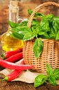 Fresh basil in a basket with chili and vegetable oil Royalty Free Stock Photo