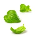 Fresh basil leaves Stock Photo