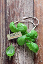 Fresh basil leaves lying grungy wooden boards decorative identification label name tag Royalty Free Stock Photo