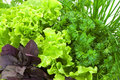 Fresh basil, lettuce, parsley and onion close-up Royalty Free Stock Images