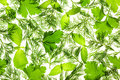 Fresh Basil, Parsley and Dill / background Stock Image