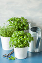 Fresh basil and thyme herbs, watering can Royalty Free Stock Photo