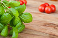 Fresh basil with tomatoes in the background and on wooden Royalty Free Stock Photography