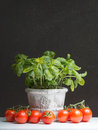 Fresh basil and tomatoes before a dark blackboard Royalty Free Stock Photography