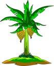 Fresh beautiful banana tree commercial farmer