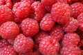 Fresh berries raspberry european rubus idaeus red Royalty Free Stock Image
