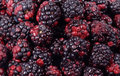 Fresh Blackberries Stock Image