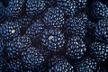 Fresh Blackberries view background Royalty Free Stock Photos