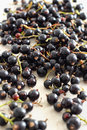 Fresh Blackcurrants Royalty Free Stock Photo