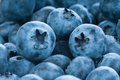 Fresh blue berries group Stock Photography