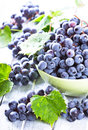 Fresh blue grape Stock Image