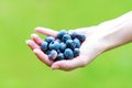 Fresh Blueberries Royalty Free Stock Photo