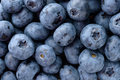 Fresh blueberries backgrounds and textures arranged as background close up shot Stock Photography