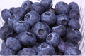 Fresh blueberries a bunch of in a container Royalty Free Stock Photo