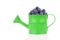 Fresh blueberries in watering can on white background Royalty Free Stock Photography