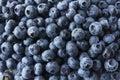 Fresh Blueberry Background.