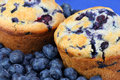 Fresh blueberry muffins and blueberrie Stock Image