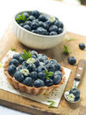 Fresh blueberry tart Stock Images