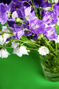 Fresh bouquet of blue and  white bell flowers Royalty Free Stock Photography