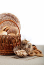 Fresh breads for a variety. Stock Photography
