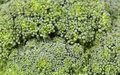 Fresh broccoli in close up whole background Stock Images