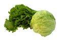 Fresh cabbage and lettuce nyoung on the white background isolate Stock Photos