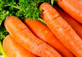 Fresh carrot Stock Image