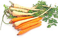 Fresh carrot and parsley with root isolated on white Royalty Free Stock Image