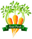 Fresh carrots with a farm fresh label illustration of the on white background Royalty Free Stock Photos