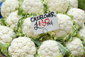 Fresh cauliflowers for sale priced at euro each Stock Photography