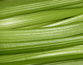 Fresh celery closeup of on market stall Royalty Free Stock Images