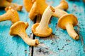 Fresh chanterelle mushrooms on a wooden background Royalty Free Stock Photo