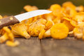 Fresh chanterelles Royalty Free Stock Images