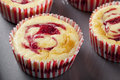 Fresh Cheesecake Muffin Royalty Free Stock Photos