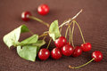 Fresh cherries with drops of water on a brown background horizontal Stock Photo