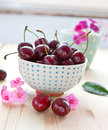 Fresh cherries in little bowl red dotted and pink flowers Stock Photo