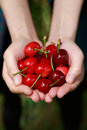 Fresh cherries woman holding closeup Stock Images