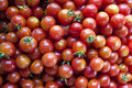 Fresh cherry tomatoes just picked Stock Photo