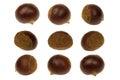Fresh chestnut isolated 360 Degrees Concept
