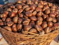 Fresh chestnuts in the basket Royalty Free Stock Photo