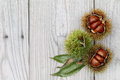 Fresh chestnuts bur on a wooden background Stock Photography