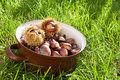 Fresh chestnuts in a pot brown full of lying the grass Royalty Free Stock Photography