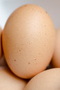 Fresh chicken eggs close up of Royalty Free Stock Images