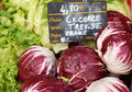 Fresh chicory vegetables for sale on provence market of marseille south france Royalty Free Stock Images