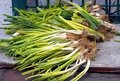 Fresh Chinese Leeks Stock Photo