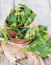 Fresh cilantro close up shot on vintage weathered wood Royalty Free Stock Images