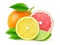Fresh citrus fruits Royalty Free Stock Photo